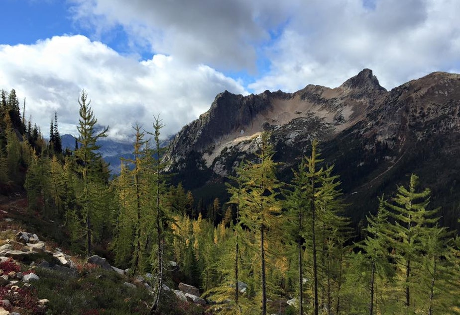 caption: Larches, a staple of the North Cascades, are shown on the Pacifc Crest Trail near Cutthroat Pass.