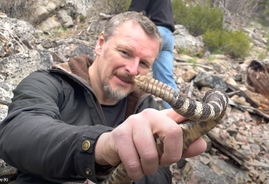 caption: Chris holding a Northern Pacific rattlesnake. The age of a snake can be determined by the number of coils on their rattlers.