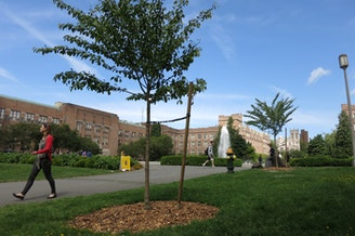 One of the 30 young cherry trees the University of Washington dedicated in a ceremony on Tuesday.