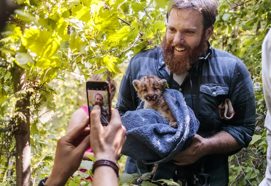 caption: 'The Wild' producer Matt Martin holds cougar kittens used in research of scientist Brian Kertson.