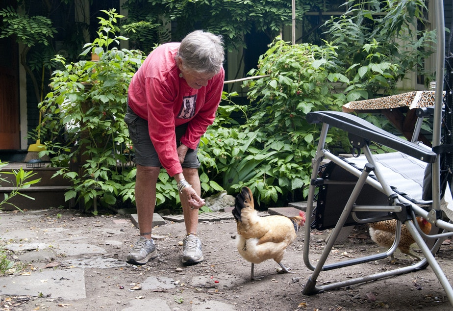 Carol Anderson feeds one of the chickens. She bought the house with her former husband and then turned it into a collective. She gave the house, valued around $1 million, to the Evergreen Land Trust in 2009.
