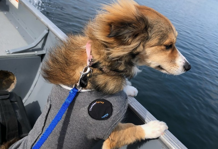 caption: Charlie, a young Terrier mix, played near shore on the Columbia River recently just north of Richland. About an hour later, she was at the vet's office dead. Now health officials have found five other pets that have either been killed or sickened by the river water.