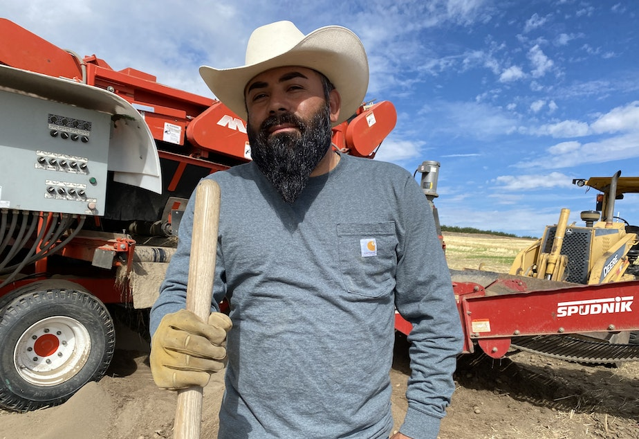 caption: Ramon Quezada, 39, a supervisor at Alford Farms north of Pasco, loves to whistle while he works. But the potatoes this year are hard to sing about: the heat caused them to grow into weird shapes, at lower densities and lower internal quality will make them harder to store over the winter.