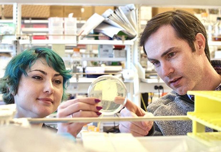 caption: Neil King and Brooke Fiala at the UW Medicine Institute for Protein Design