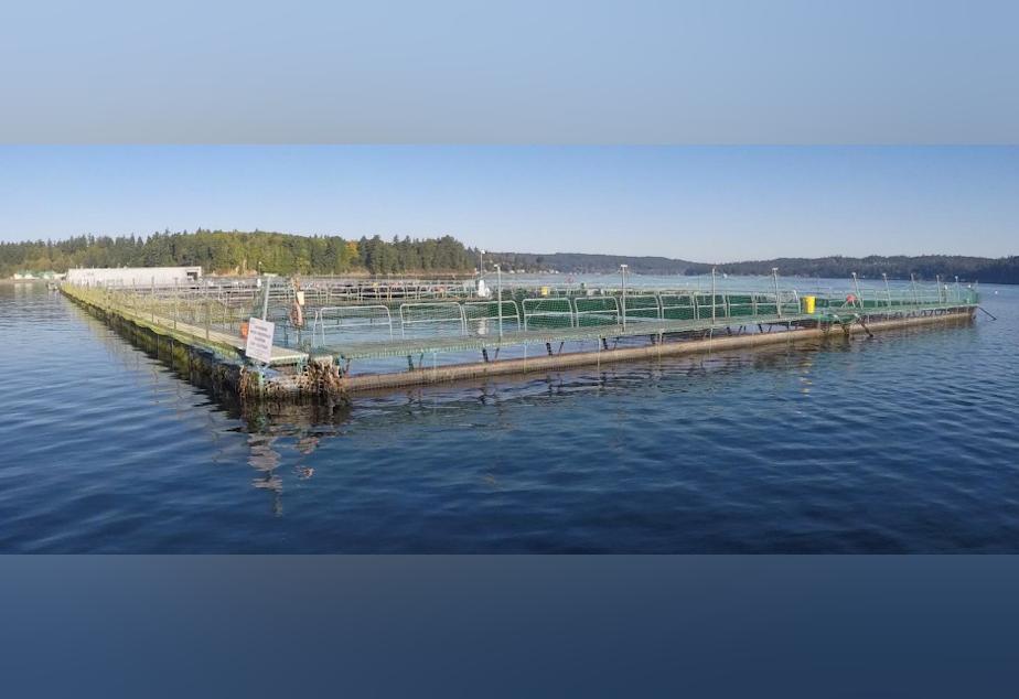 Cooke Aquaculture's Atlantic salmon farm in Clam Bay, Rich Passage, between Bainbridge Island and the Kitsap Peninsula