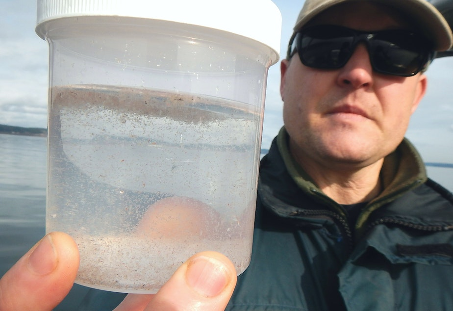 caption: Nisqually tribe biologist Chris Ellings holds up a sample of plankton from Puget Sound.