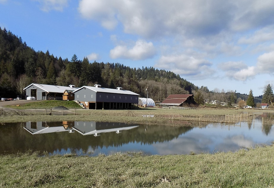 caption: The main buildings at the Haacks' farm south of Duvall sit on an artificial pad, 10 feet above the Snoqualmie River flood plain.