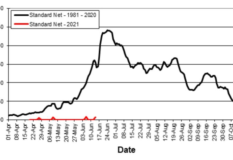 caption: Diminished returns: The red line shows this year's results of a test fishery conducted by Fisheries and Oceans Canada to gauge the number of Chinook salmon returning to the Fraser River. The much higher black line shows the 40-year average, measured in catch per unit effort.