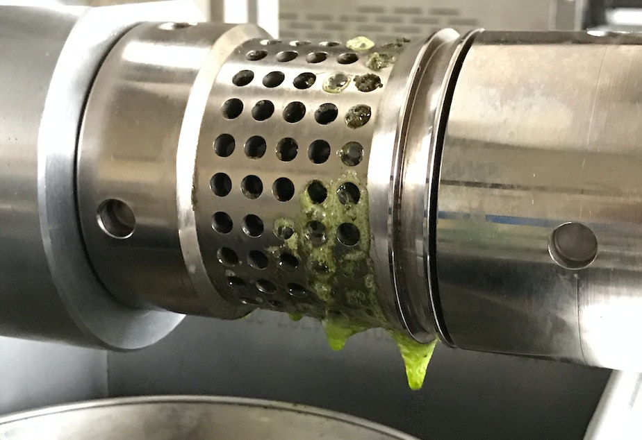 Hemp oil drips from the press this month as startup Hemp Northwest processes its first harvest.