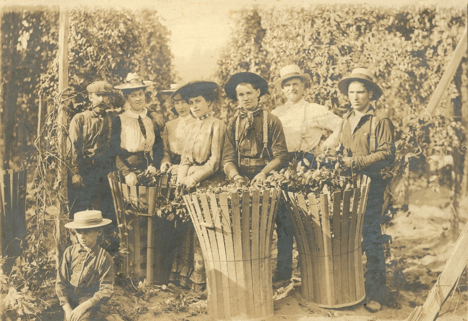 caption: Hops pickers at Titus Farm, on the site of modern-day Kent (formerly known as Titusville). Titus farm and Titusville were named after the same prominent family of settlers. Everett E. Titus in white shirt.