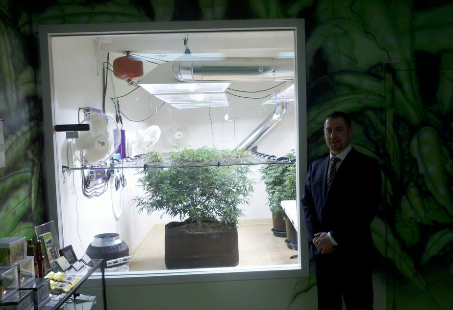 caption: Sean Green's medical marijuana collective features a window into the light-filled grow room.