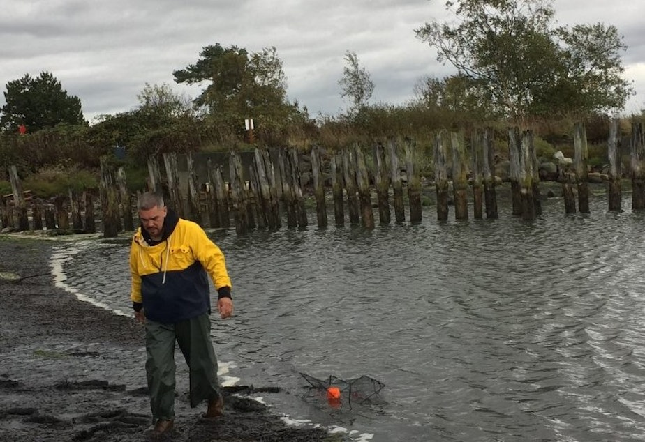 caption: Lummi fisherman Daniel Washington sets a trap for European green crabs on Lummi reservation tidelands.