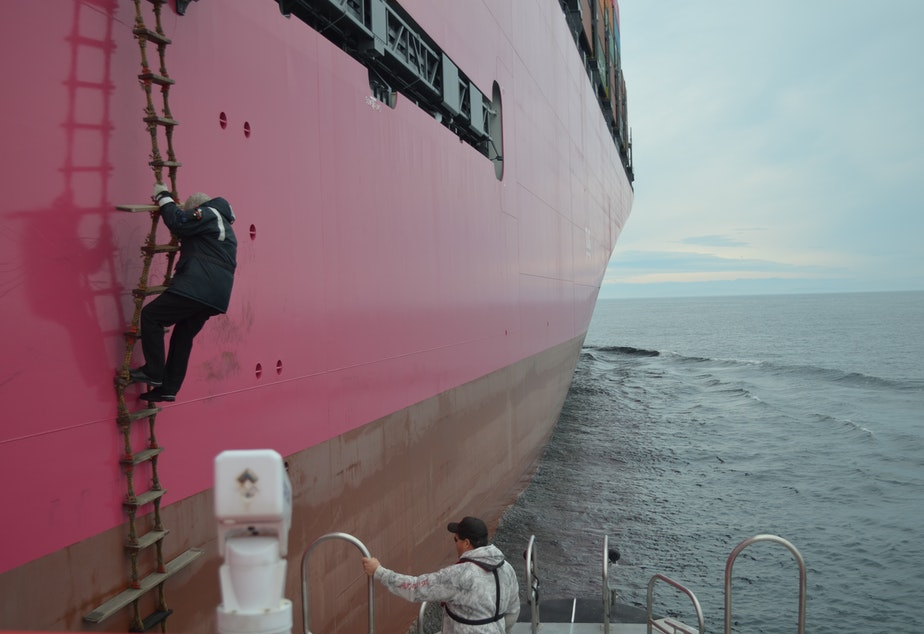A Puget Sound pilot disembarks from a containership.