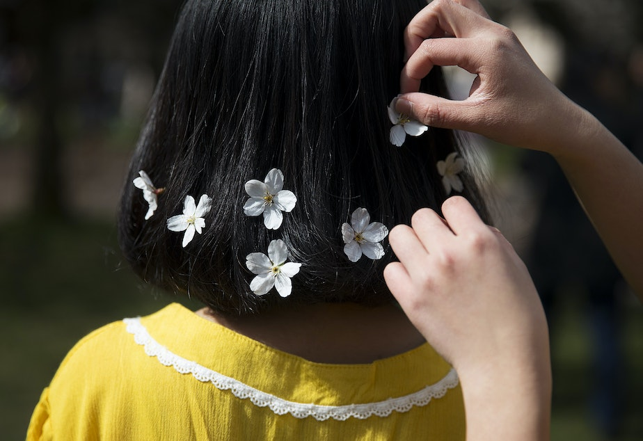 Aleah Vo places cherry blossoms in Katherine Nguyen's hair before taking a photograph on Monday, March 19, 2018, on the University of Washington campus, in Seattle.