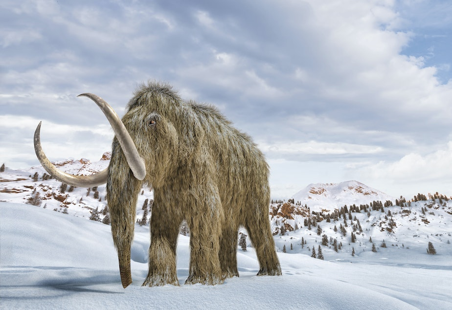 caption: An artist's impression of a woolly mammoth in a snow-covered environment.