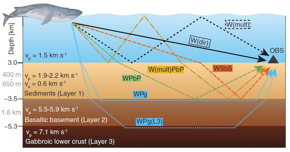 caption: Diagram from Kuna and Nabelek study illustrates how fin whale songs travel through and beneath the ocean.