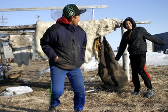 Two teenagers in Kivalina, Alaska, play near a skinned polar bear. Scientists predict Kivalina, an Alaskan village, will be the first casualty of climate change and sea rising in the U.S.