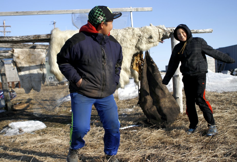 caption: Two teenagers in Kivalina, Alaska, play near a skinned polar bear. Scientists predict Kivalina, an Alaskan village, will be the first casualty of climate change and sea rise in the U.S.