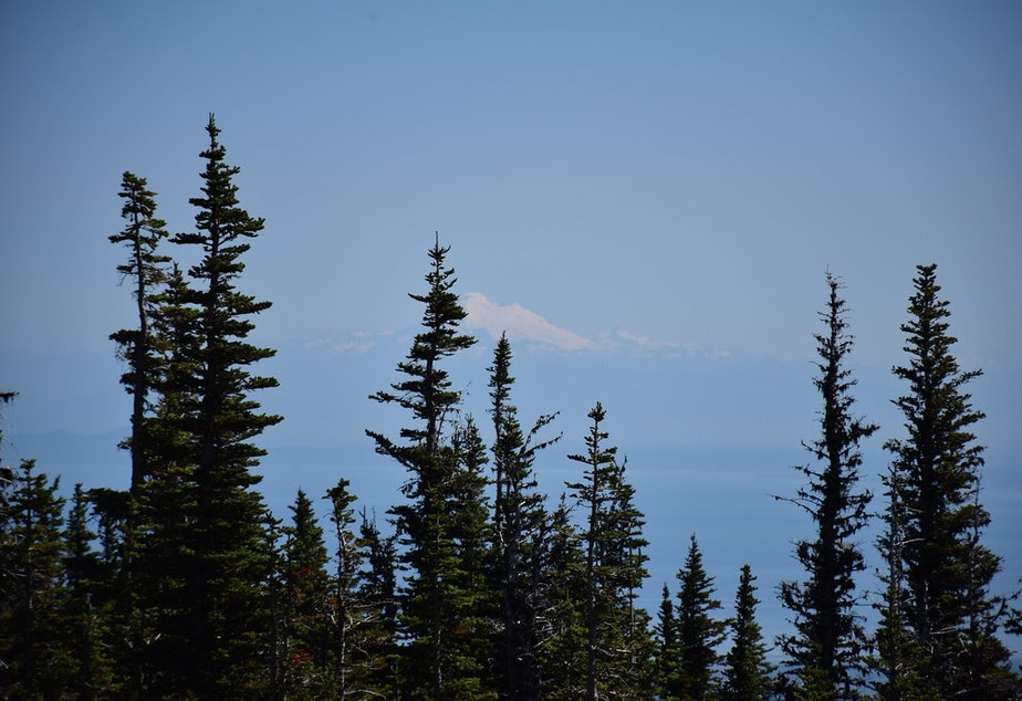 caption: A view of Mount Rainier from within Olympic National Park.