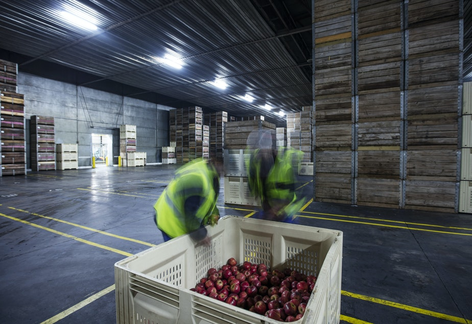 caption: Different apples need different controlled storage environments. For example, Honeycrisps are sensitive to low temperatures so you can't put them in cold environments right after they've been harvested. And Fujis can't take high carbon dioxide levels.