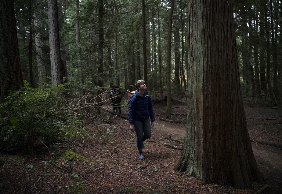 Forest therapy guide and educator Julie Hepp walks through the forest on Friday, January 18, 2019, at IslandWood, a learning center on Bainbridge Island.
