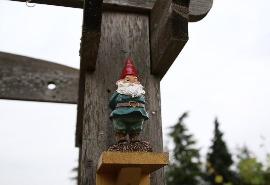A garden gnome monitors activity at the Ballard P-Patch
