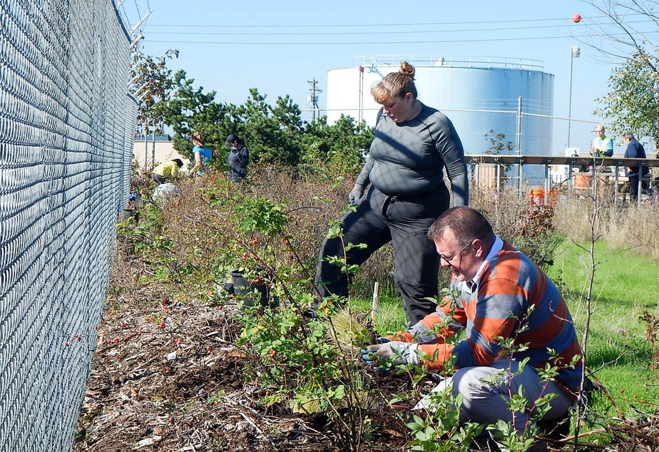 Volunteers Rebecca Sutherland and Thomas Erber help restore Tacoma's Rhone-Poulenc salt marsh.