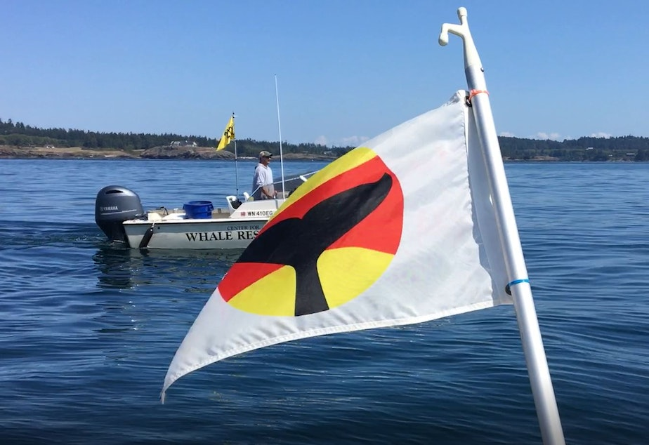 caption: A whale-warning flag, designed to warn boaters that orcas are nearby, flies off the stern of University of Washington whale researcher Deborah Giles' boat off San Juan Island in August 2019