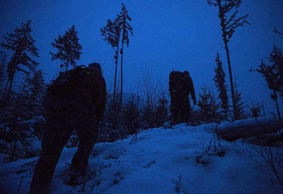caption: Houndsman Greg Jones, left, and Chris Morgan, host of The Wild, right, hike after an attempted cougar capture mission of Bramble, a 3-year-old female cougar, on Tuesday, January 14, 2020, on the Olympic Peninsula.