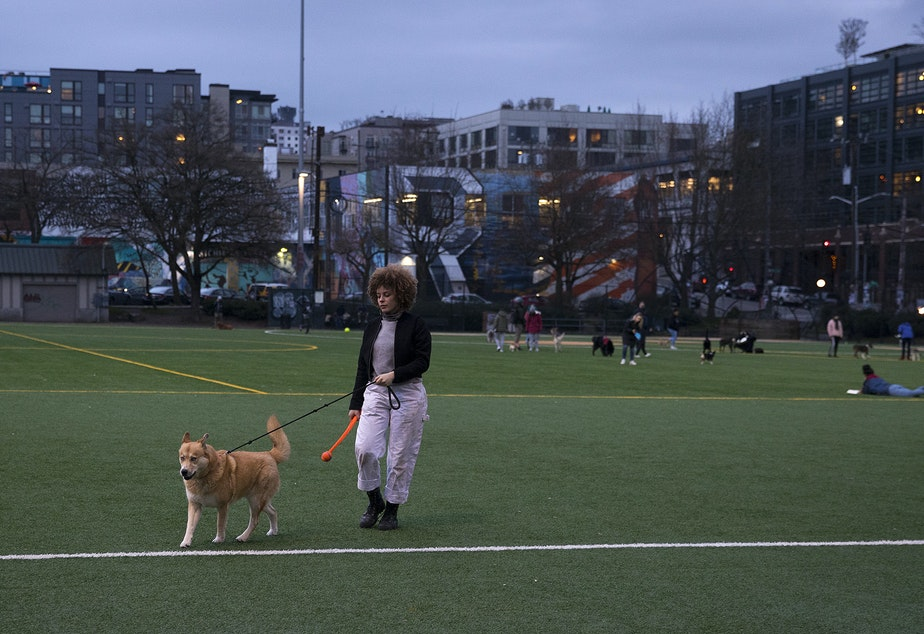 caption: Biggest Carbon Loser contestant Meredith Cooper walks her husky mix Sun Ra at Cal Anderson Park in Seattle.