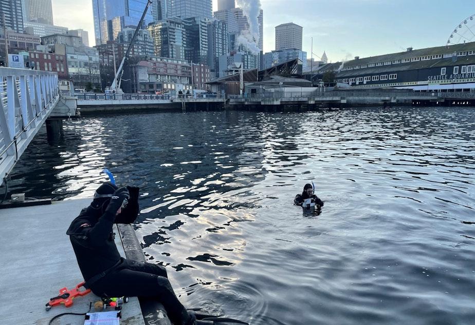 caption: Jason Toft prepares to enter the water off downtown Seattle to survey juvenile salmon.