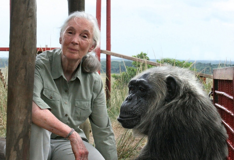 caption: Jane Goodall with LaVielle at the Tchimpounga Chimpanzee Rehabilitation Center in the Republic of the Congo. (© Jane Goodall Institute/Fernando Turmo)