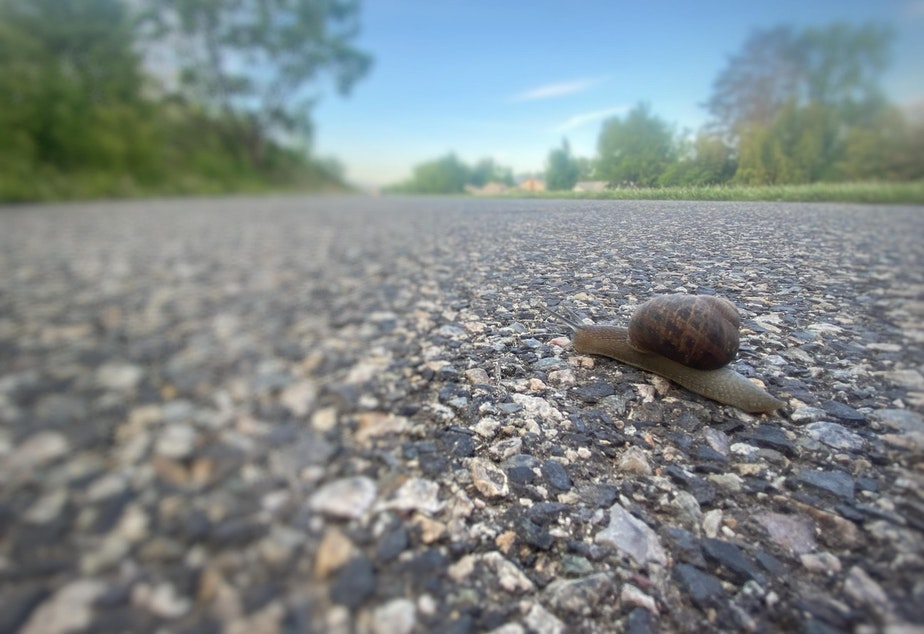caption: Correspondent Anna King has been fighting COVID-19 and it's after effects for a year now. It's been a slow journey, like that of this snail she found crossing a walking path near the Columbia River in Richland.