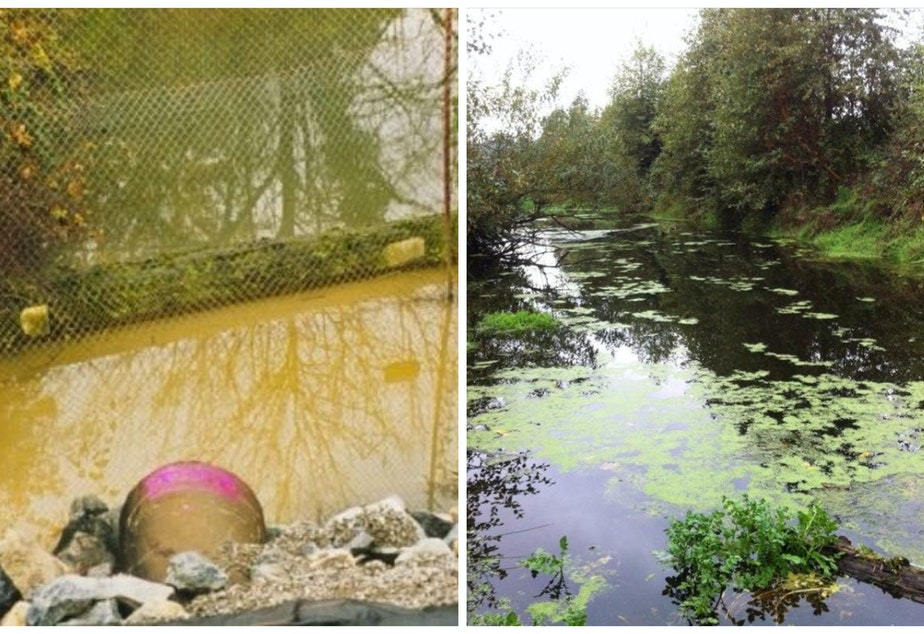 Hamm Creek, before (left) and after John Beal's conservation efforts. His daughter, Liana Beal, remembers when their family first moved to the area, and would find dead fish in the creek. Now salmon have returned.
