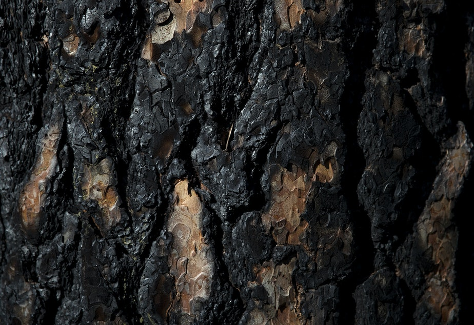 caption: A burned tree is visible along Highway 20, near Loup Loup Ski Bowl on Tuesday, April 23, 2019, east of Twisp, Washington.