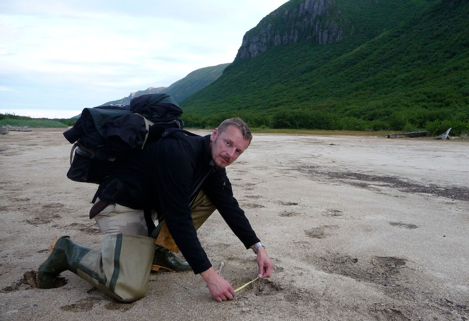 Host Chris Morgan measuring brown bear tracks on the Alaska Peninsula. Some of the big ones are 15 inches long!