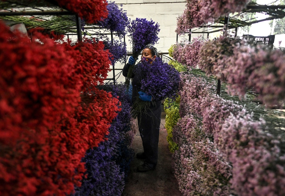 caption: An employee places bouquets on shelves in Bogotá on Feb. 1, as Colombia prepares to export flowers for Valentine's Day amid the new coronavirus pandemic.
