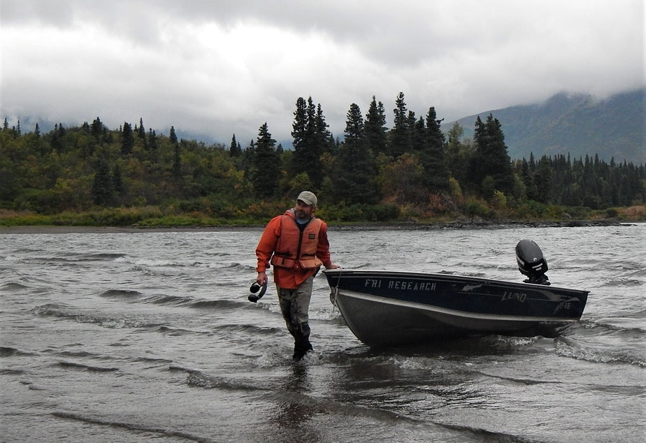 University of Washington biologist Daniel Schindler hauls a skiff ashore on Lake Nerka.