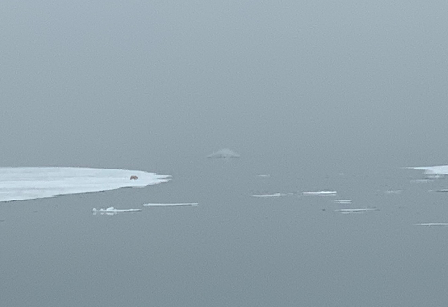 caption: A polar bear stands at an icy edge off the archipelago of Svalbard.