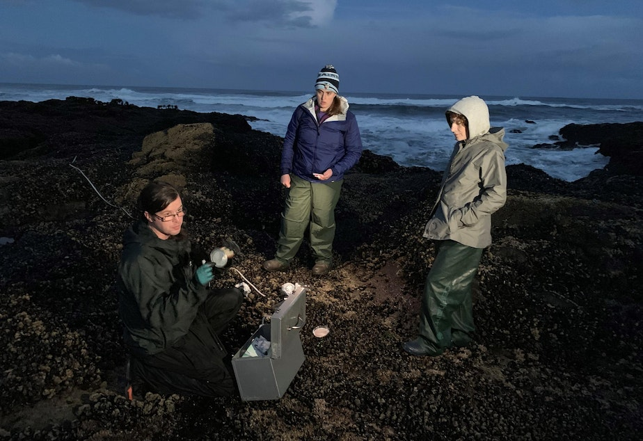 OSU researchers Andrew Williams, from left, Katherine Lasdin and Susanne Brander collected mussels and whelks at Yachats, Oregon, on Sept. 28.