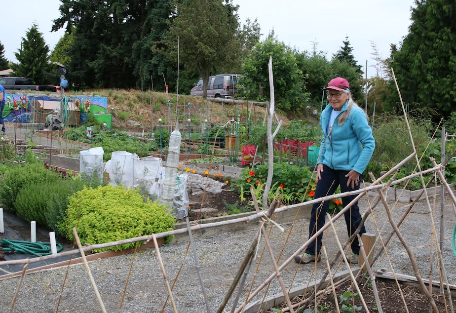 caption: Mary Jean Gilman inspects a cucumber trellis in the Giving Garden at the Ballard P-Patch