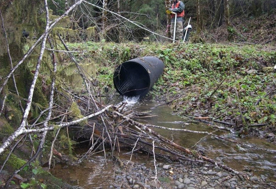 A salmon-blocking culvert on the Dickey River on the Olympic Peninsula