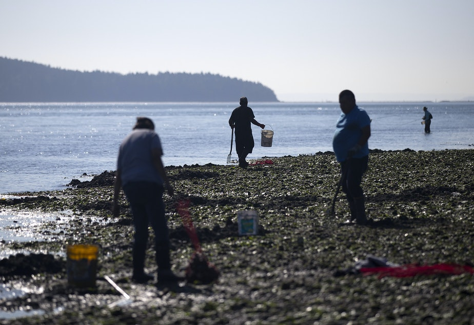 caption: Greg Yakanak, center, carries a bucket while digging for clams that will be used primarily as bait on Tuesday, August 27, 2019, at Ala Spit County Park.