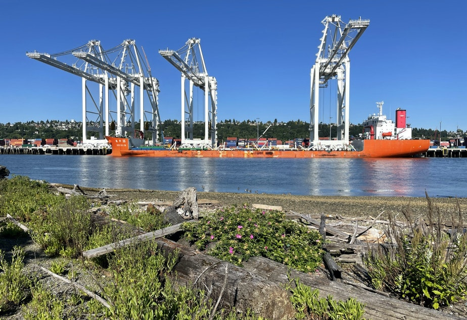 caption: On Monday morning June 21, three of the four 316-foot tall cranes from China had been unloaded from the ship that carried them across the ocean at the Port of Seattle's Terminal 5.