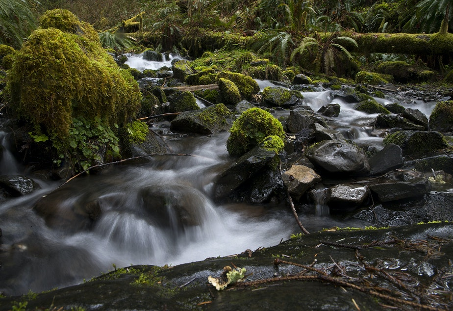 caption: Water flows through moss and rocks on Friday, April 5, 2019, in the Hoh Rainforest on the Olympic Peninsula.