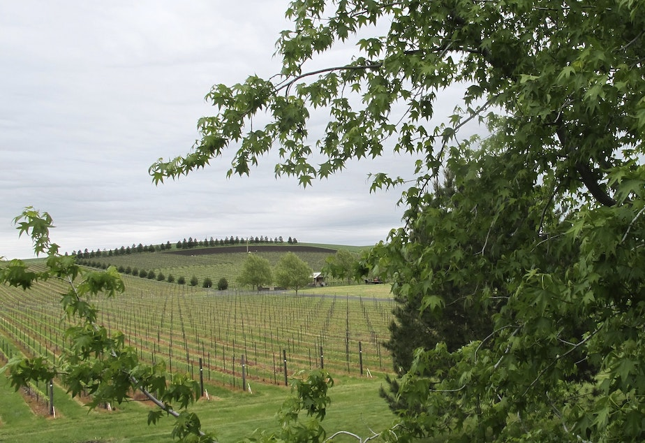 In this photo taken May 17, 2017, a vineyard adjacent to the Walla Walla Vintners winery is shown in Walla Walla, Wash. The remote southeastern Washington town of Walla Walla - which used to be best known for sweet onions and as home of the state penitentiary - has now reinvented itself into a center of premium wines and wine tourism.