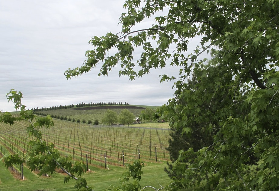 caption: In this photo taken May 17, 2017, a vineyard adjacent to the Walla Walla Vintners winery is shown in Walla Walla, Wash. The remote southeastern Washington town of Walla Walla - which used to be best known for sweet onions and as home of the state penitentiary - has now reinvented itself into a center of premium wines and wine tourism.