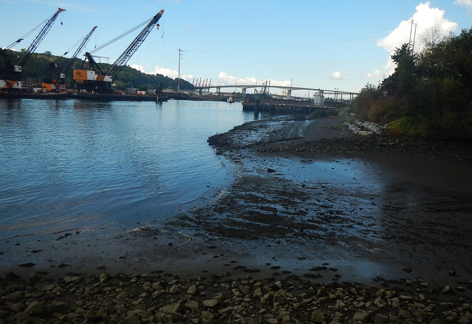 Muddy sediments on the bottom of the Duwamish River are contaminated with at least 42 toxic chemicals from a century of heavy industry.