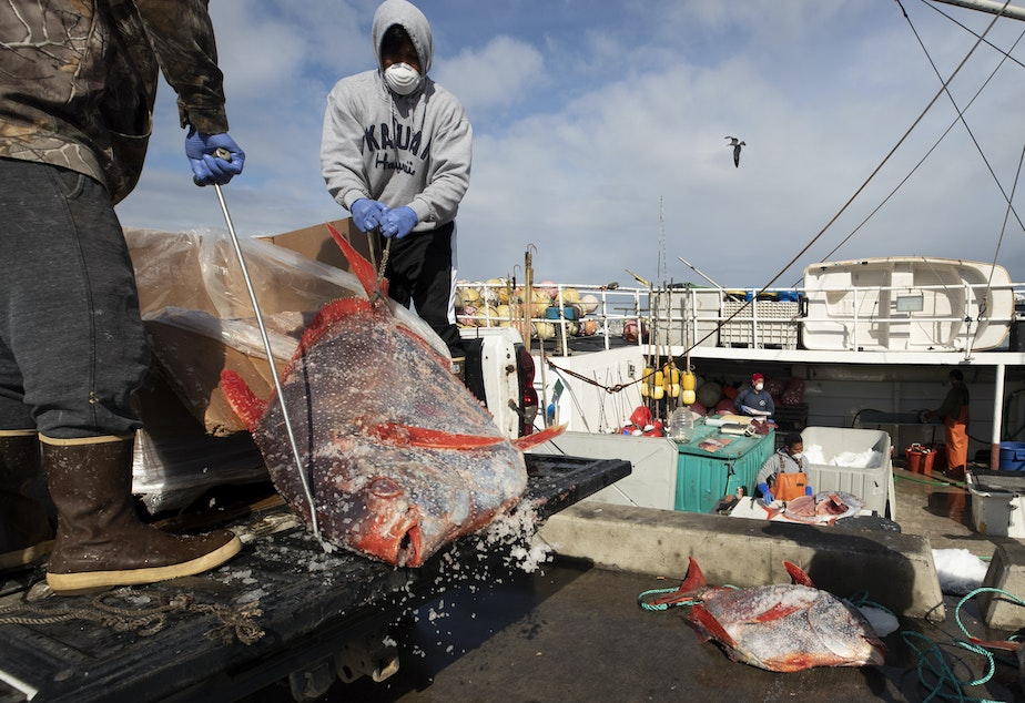caption: Opah fish are hauled onto a dock for sale last week in San Diego. Fishermen coming home to California after weeks at sea are finding strict anti-coronavirus measures, and nowhere to sell their catch.