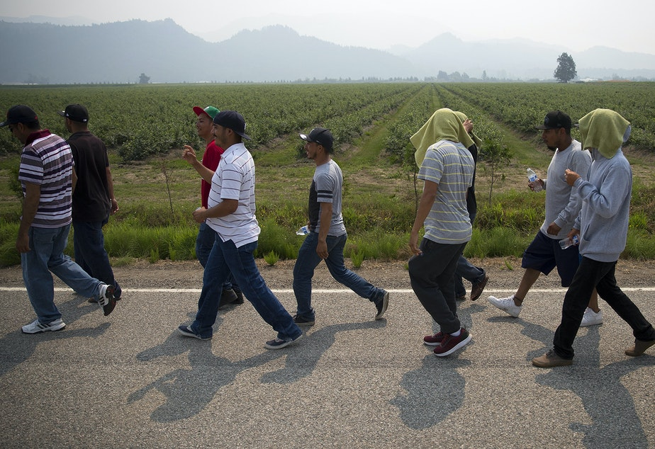 caption: Farmworkers march in protest of working conditions at Sarbanand Farms on Wednesday, August 8, 2017, after a fellow worker, Honesto Silva Ibarra, 28, died on Sunday. Click or tap on this image for more photos.